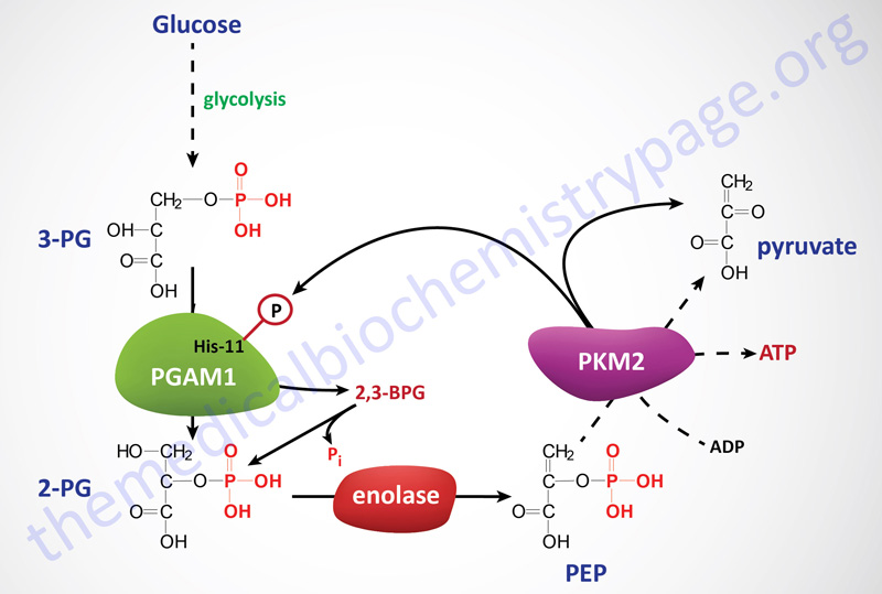 alternate pathway of glycolysis in cancer cells