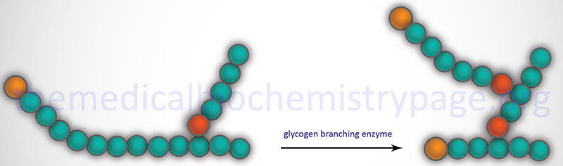 Reaction catalyzed by glycogen branching enzyme