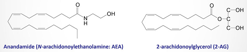 Structures of anandamide (AEA) and 2-arachidonoylglycerol (2-AG)