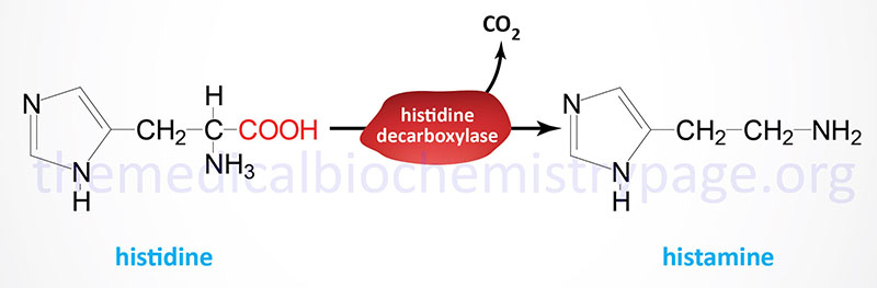Synthesis of histamine